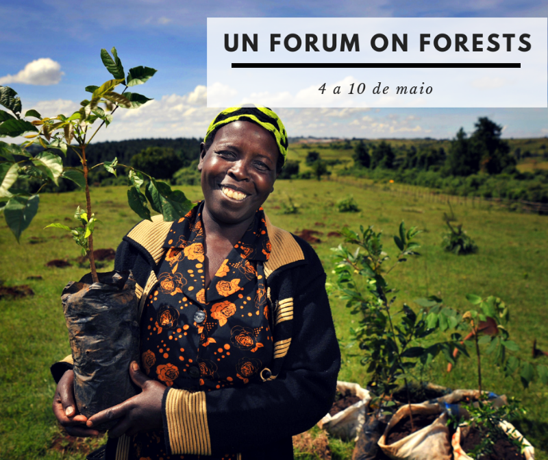 UN Forum on Forests